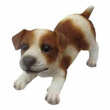 Decoratie beeld jack russel puppy honden 14 cm bruin/wit
