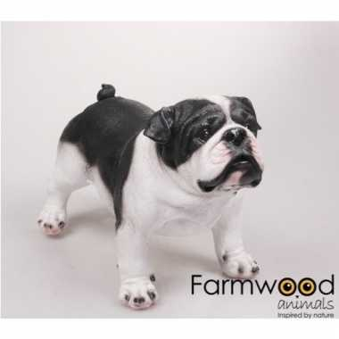 Decoratie beeld staande engelse bulldog honden zwart/wit 41 cm