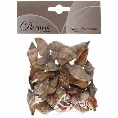 Decoratie schelpen zeeslak/strombus urseum 3 cm