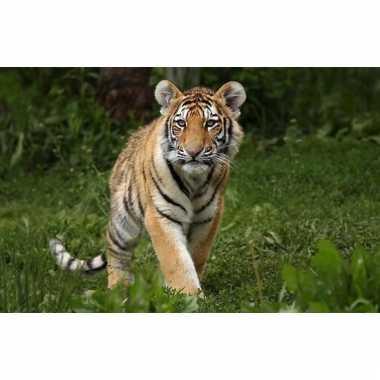 Dieren placemat 3d tijger