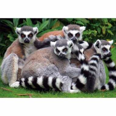 Dieren placemats ring-tailed lemur