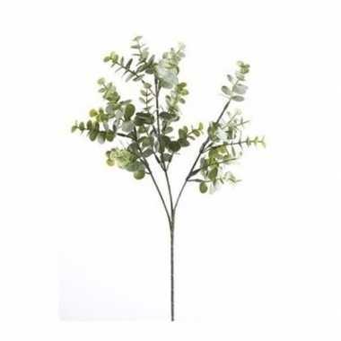Eucalyptus nep tak 65 cm groen/grijs