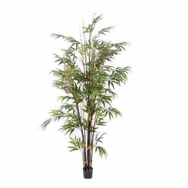 Hawaii bamboe boom 190 cm