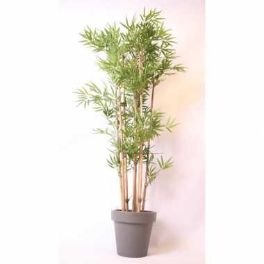 Hawaii bamboe boom in pot grijs 190 cm
