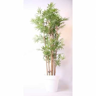 Hawaii bamboe boom in pot wit 190 cm