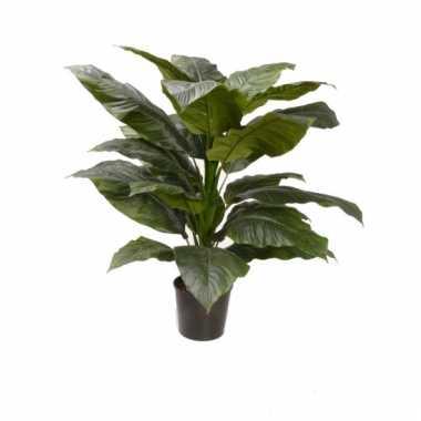 Kamerplant spathiphyllum 90 cm