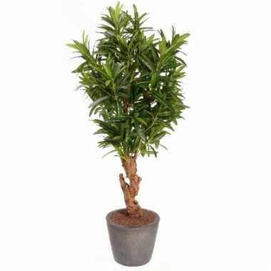 Oleander bladstruik 130 cm