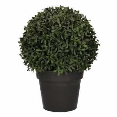 Ronde buxus nepplant 35 cm