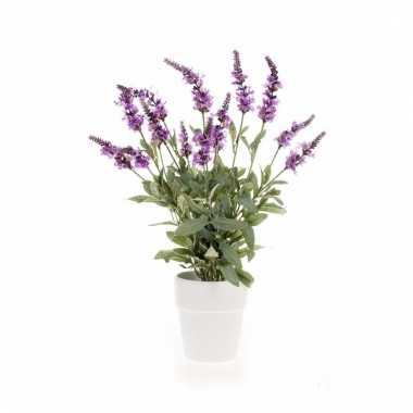 Salvia bos 60 cm paars in witte pot