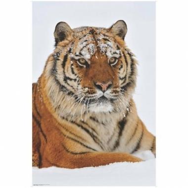 Themafeest dieren poster siberische tijger