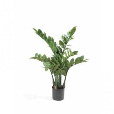 Zamioculcas nepplant in pot 70 cm