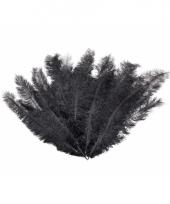 12 grote zwarte veren
