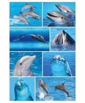 24x dolfijn stickertjes voor kinderen