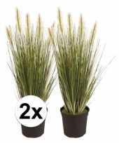 2x grasplant nep 55 cm groen in pot