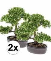 2x nep ficus mini bonsai boompje 32 cm