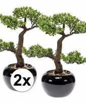 2x nep pilea bonsai boompje 34 cm