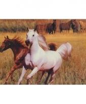 3d dieren placemats paarden type 3