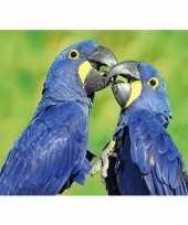 3d magneten hyacint ara papegaaien