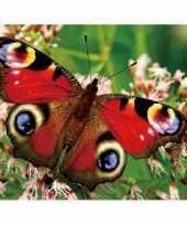3d magneten pauwoog vlinder