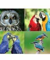 4 stuks 3d magneten met vogels