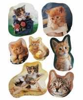 63x kitten stickertjes voor kinderen