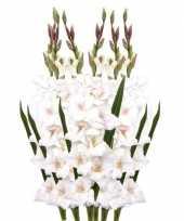 6x kunstbloem gladiool wit