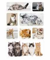 72x poesjes kittens stickertjes voor kinderen