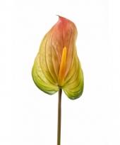 Anthurium neptakje 75 cm roze groen
