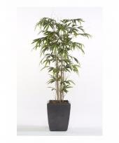 Bamboe promo nepplant in pot 150 cm