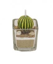 Bolcactus kaars 5 cm