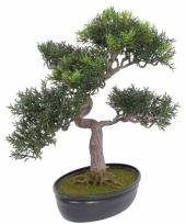Bonsai boompje 40 cm