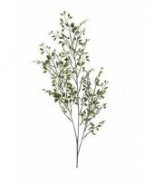 Buxus nep tak 75 cm groen