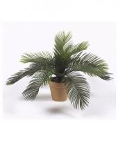 Cycas palm nepplant 35 cm