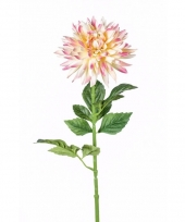 Dahlia nep tak 70 cm roze