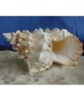 Deco schelp rond 15 cm