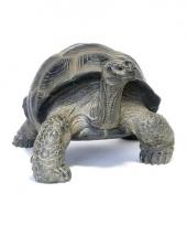 Decoratie beeld schildpad dier 26 cm