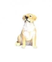 Decoratie beeld witte labrador hond 21 cm