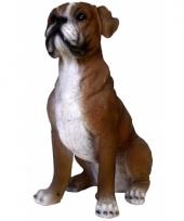 Decoratie beeldje boxer hond 25 cm
