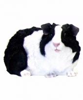 Decoratie beeldje langharige zwarte cavia