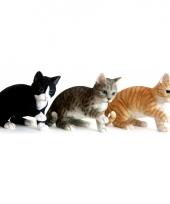 Decoratie beeldje spelende zwarte kat 35 cm