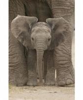 Decoratie poster olifanten 61 x 96 cm