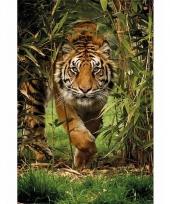 Decoratie poster tijgers 61 x 96 cm