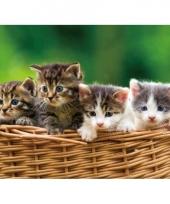 Dieren placemat kitten 3d