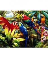 Dieren placemats ara papegaai