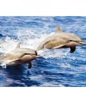 Dieren placemats dolfijntjes