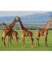 Dieren placemats giraf 28 x 44 cm