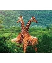 Dieren placemats giraf