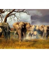 Dieren placemats olifanten