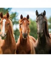 Dieren placemats paard 10063047