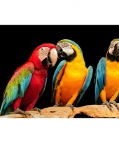 Dieren placemats papegaaitjes
